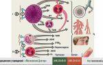 Аллергическая реакция организма на пиво