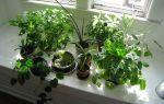 Комнатные растения, вызывающие аллергию – домашние цветы