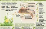Как правильно очистить организм при аллергии?